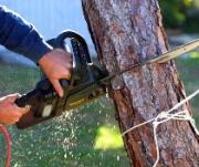 Angri, al via un piano per la messa in sicurezza e l'abbattimento di alberi