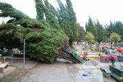 Legna tagliata al cimitero, la Procura di Nocera Inferiore chiede l'archiviazione del caso
