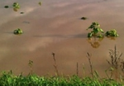 Agroinvest sversa acque pluviali su colture, diffidata dal Comune