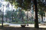 Angri, 23 alberi da abbattere per ragioni di sicurezza